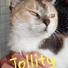 Jollity